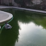 How To Turn Your Pool From Green To Clean