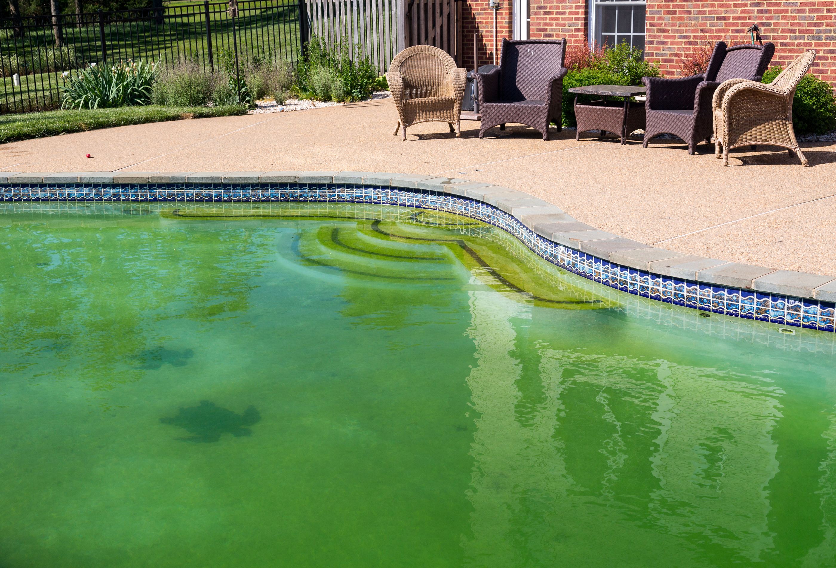 Why Did My Pool Turn Green